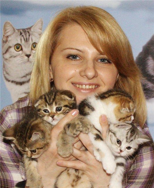 Ксения со своим первым пометом Шотландских котяток