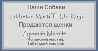 Наша охрана, защита! Продаются Щенки Испанского Мастифа. Запись на Щенков Тибетского Мастифа на осень 2010 года.