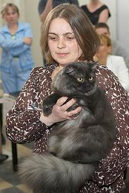 Шотландский полудлиношерстный кот, окрас: Черный дым, Vegas SuperFold